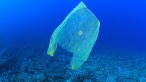 By MichaelisScientists (Own work) [CC BY-SA 4.0 (http://creativecommons.org/licenses/by-sa/4.0)], via Wikimedia Commons (https://commons.wikimedia.org/wiki/File:1682478-poster-1280-plasticbags.jpg)